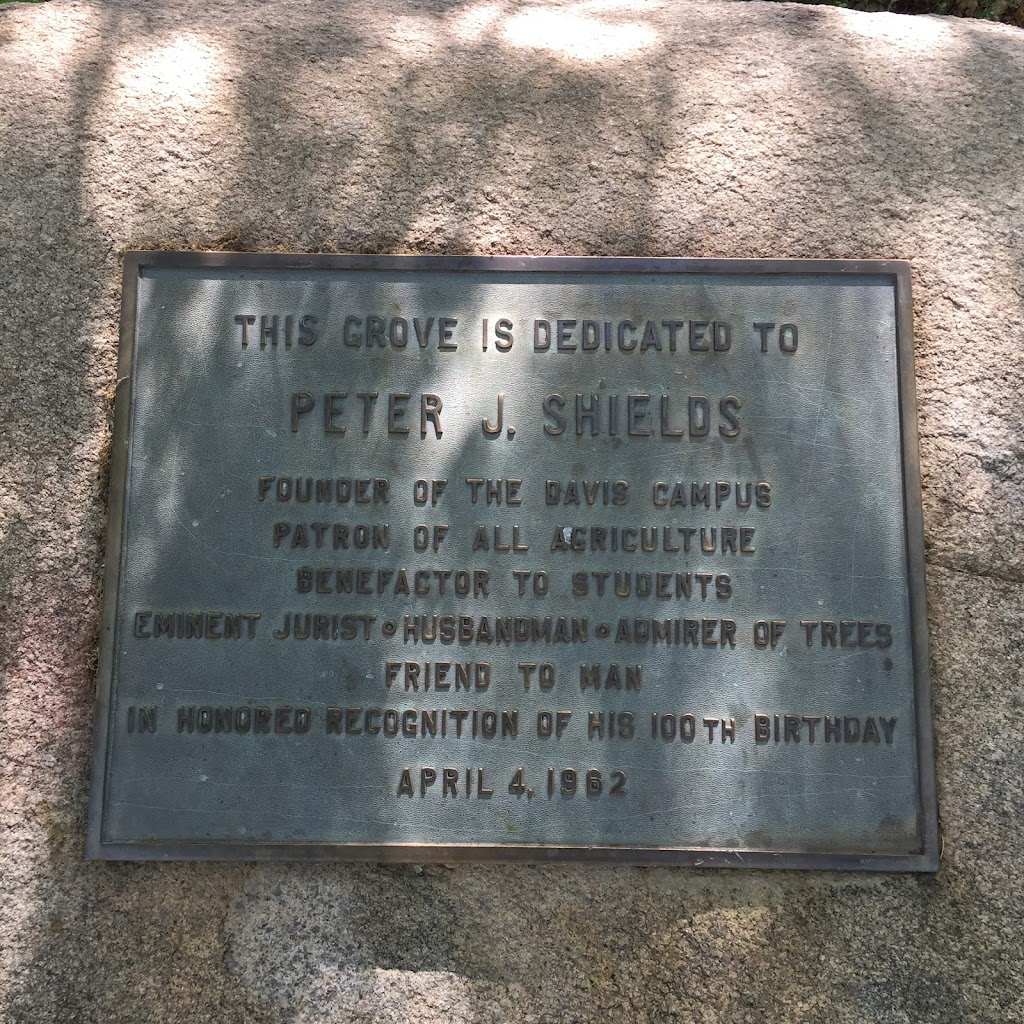 THIS GROVE IS DEDICATED TO PETER J. SHIELDS FOUNDER OF THE DAVIS CAMPUS PATRON OF ALL AGRICULTURE BENEFACTOR TO STUDENTS EMINENT JURIST HUSBANDMAN ADMIRER OF TREES FRIEND TO MAN IN HONORED ...