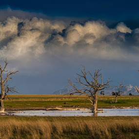 Northern Grampians Winter Day by Lynton Brown - Landscapes Cloud Formations ( water, mountains clouds, trees, lynton brown )