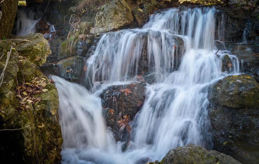 Small Cascade by Robert Coffey - Nature Up Close Water ( stream, nature, cascade, waterfall, rocks,  )