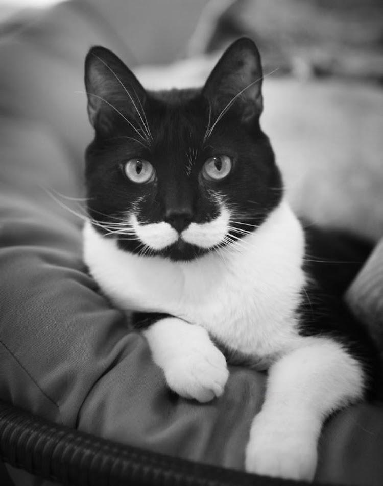 That mustache has all the attitude