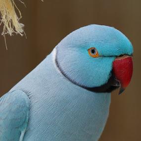 by Sandra Cannon - Animals Birds