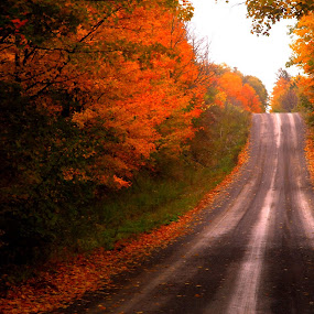 Country Road by Steve Cooper - Landscapes Travel ( damp, bright foliage, airy, gravel road )