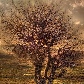 by Димитър Чобанов - Nature Up Close Trees & Bushes