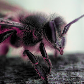 Bee by Rodhifan Fdp - Instagram & Mobile Android ( macrodaily, macros, macro, macrophotography, bee, macro photography, nature up close, bug, nature close up, insects, insect, macro shot, animal )