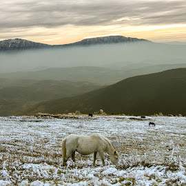 Wild horses by Branislav Mitrovic - Animals Horses ( winter, mountain, peak, sunset, snow, horse )