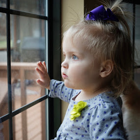 What's out there? by Janice Poole - Babies & Children Toddlers