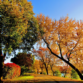 Autumn Peaks At Ojibway Islad by Howard Sharper - City,  Street & Park  City Parks ( cityscapes, autumn leaves, autumn, parks, autumn colors, city park, landscapes )