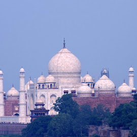 THE TAJMAHAL by SANGEETA MENA  - Buildings & Architecture Statues & Monuments
