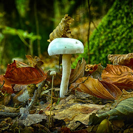 Don't Veer Away From Mum ! by Marco Bertamé - Nature Up Close Mushrooms & Fungi ( mushroom, fungi, autumn, fall, white, moss, forest, leaves )