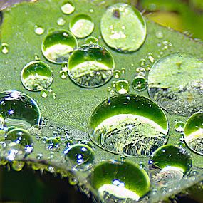 waterdrops by Mrak Rado- Fotograf - Nature Up Close Natural Waterdrops ( water, green, shine, waterdrops, droplets )