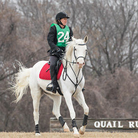 Equestrian Horse and Rider by Terry Watson - Sports & Fitness Other Sports