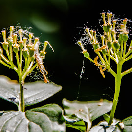 by Drago Gatolin - Nature Up Close Webs