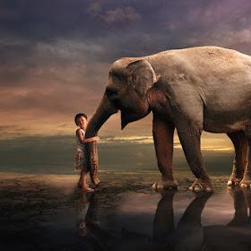 Gajah love Galen.jpg