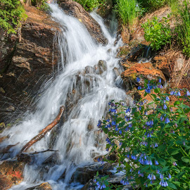 Bluebells By The Waterfall by Kathy Suttles - Nature Up Close Water