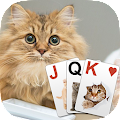 Download Solitaire Lovely Cats APK for Android Kitkat