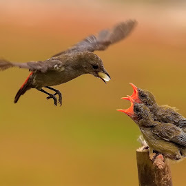 Whose turn is it ? by MazLoy Husada - Animals Birds