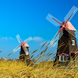 Windmill by Debobrata Entitled - Landscapes Prairies, Meadows & Fields ( wind, scenic, landscapes, landscape, windmill )