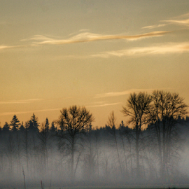 fog in the morning  by Todd Reynolds - Landscapes Forests