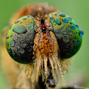 by Ardhy Muhammad - Animals Insects & Spiders