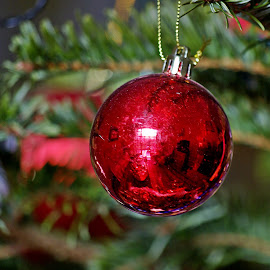 Round contrast by Ciprian Apetrei - Public Holidays Christmas ( contrast, decoration, christmas, brittany, globe )