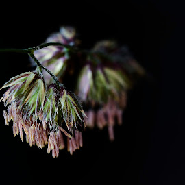 by Wendy Faber - Novices Only Macro