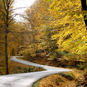 Dream  by Hamed Ghalandar - Landscapes Forests ( iran, zirab, sipey, , fall, color, colorful, nature )