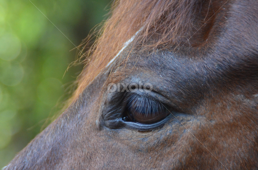The eye speaks by Arvind Akki - Animals Horses ( animals,  )