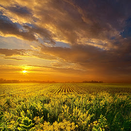 A Time of GIfts by Phil Koch - Landscapes Sunsets & Sunrises ( clouds, life, emotions, mood, journey, travel, spring )