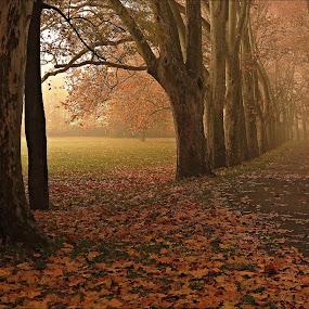 by Ludvík Sukup - Landscapes Forests
