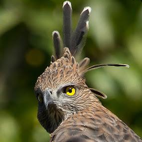 by S Balaji - Animals Birds (  )