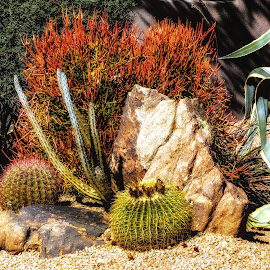 Carefree Cactus Garden by Dave Walters - Nature Up Close Other plants ( cactus nature, carefree, lumix fz200, az, colors )