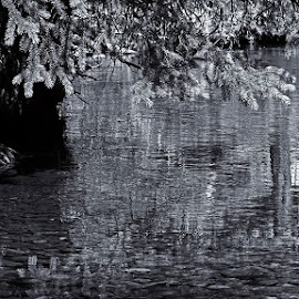 Pool Reflecting by Marko Ginsberg - Nature Up Close Water ( reflection, black and white, summer, aug )
