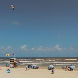 Beautiful Day at the Beach by Bonnie Davidson - Public Holidays July 4th ( clouds, water, vendor, white, beach, fun, landscape, people, city, galveston island, lifeguard, seagull, sky, umbrellas, blue, fourth of july, beige, red. bird, gulf of mexico, 4th )