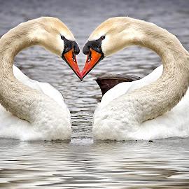 Swan Song by Ron Meyers - Digital Art Things