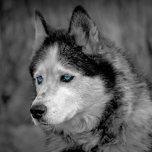 dogwof.jpg