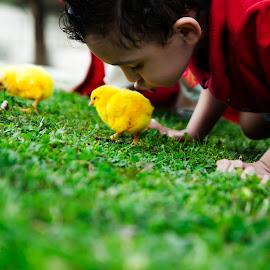 Innocence by Sara  Ali - Babies & Children Children Candids ( child, kids playing with chick, nature, kids and nature, innocence, chicks, animal )
