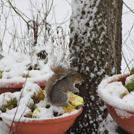 Squirrels in Winter by Julie Marcum - Nature Up Close Other Natural Objects