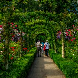 Butchart Garden by Joseph Law - City,  Street & Park  City Parks
