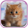 App Cute Kittens Live Wallpaper APK for Kindle