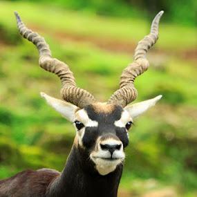 by Hansen Christian - Animals Other Mammals