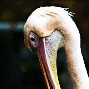 by Aritra De - Animals Birds
