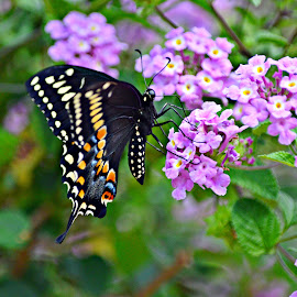 Butterfly by Bernadette Mueller - Novices Only Wildlife