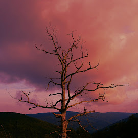 Angry and Pink by Gab Lombardi - Landscapes Cloud Formations ( sky, sunset, blue ridge mountain, angry, virginia, travel, nikon, storm )