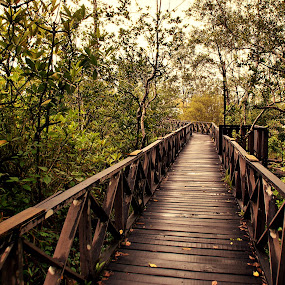 Into the wild by Mohamad Hafizuddin - Buildings & Architecture Bridges & Suspended Structures