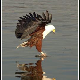 Catch 22 by Romano Volker - Animals Birds