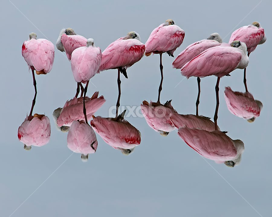 Silent Reflections by Shelly Wetzel - Animals Birds