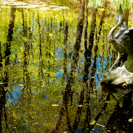 Reflection Of Spring by Tina Hailey - Nature Up Close Water ( water, tress, tina's captured moments, reflections, pond, spring )