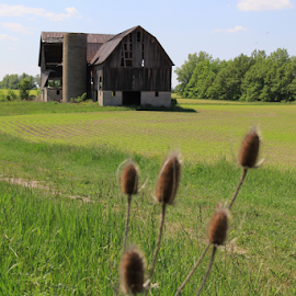 Abandoned by Marsha Biller - Buildings & Architecture Other Exteriors ( field, huge, barn, scenic, weeds in foreground, deteriorated, abandoned )