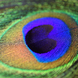 Lovely Colors by Ed Hanson - Abstract Macro ( macro, blue, green, feather, black, peacock )