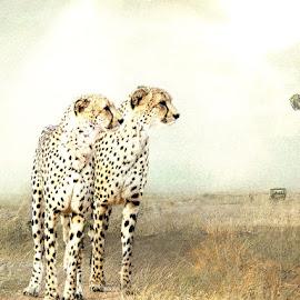 Magical Africa by Bjørn Borge-Lunde - Digital Art Animals ( wild animal, cheetah, wilderness, big cats, wildlife, africa )